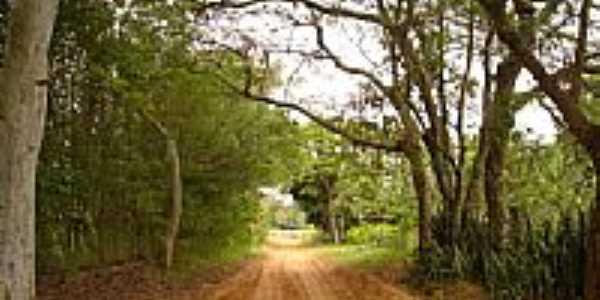 Antiga estrada de Sapezal-Foto:wilspavier