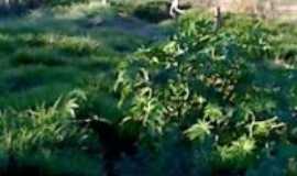 Sarutaiá - mata, Por juninho