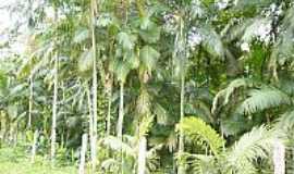 Sete Barras - Vegetação