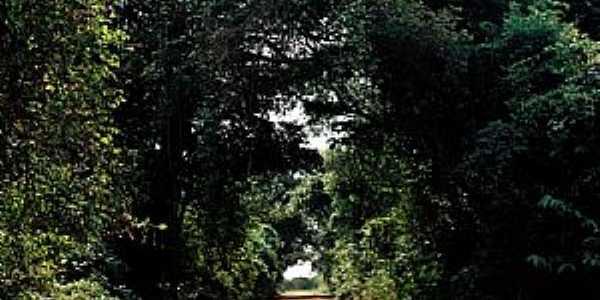 Tabatinga-SP-Túnel Verde-Foto:PRADO-BR2