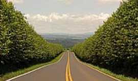 Tambaú - Tambaú-SP-Linda estrada até a cidade-Foto:Altemiro Olinto Cristo