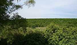 Taquaral - Taquaral-SP-Plantação de laranja-Foto:Umberto Moreno