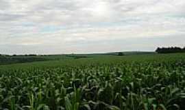 Taquarivaí - Plantação de milho-Foto:balves14