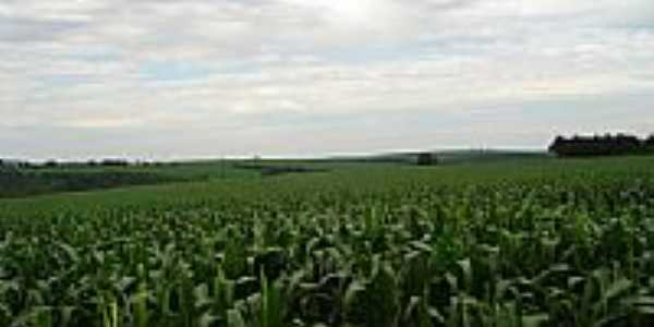 Plantação de milho-Foto:balves14