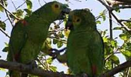 Teodoro Sampaio - Teodoro Sampaio-SP-Fauna e Flora no Parque Estadual