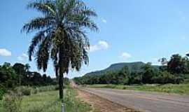 Teodoro Sampaio - Teodoro Sampaio-SP-Palmeira com ninhos e ao fundo a Serra do Diabo-Foto:Isa Lanziani