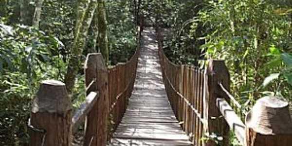 Teodoro Sampaio-SP-Passarela no Parque Estadual do Morro do Diabo-Foto:www.ambiente.