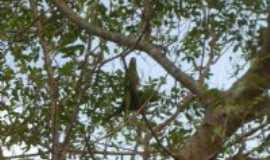 Uru - Periquitos no quintal., Por Luiz Carlos(Flamino) Zangrande