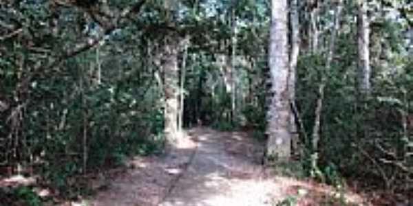 Trilha no Parque Eco-Turístico em Valentim Gentil-SP