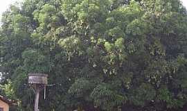 Aliança do Tocantins - Aliança do Tocantins-TO-Velha mangueira-Foto:Smokerneko