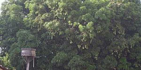Aliança do Tocantins-TO-Velha mangueira-Foto:Smokerneko