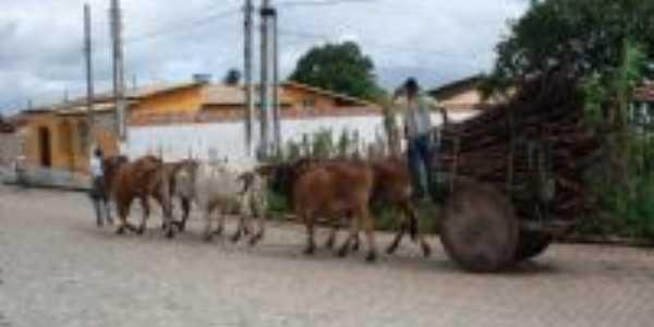 Carro de boi, Por cassivaldo