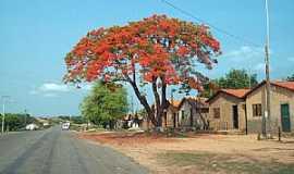 Axixá do Tocantins - Axixá do Tocantins-TO-Flamboyant na entrada da cidade-Foto:Fernando Cunha