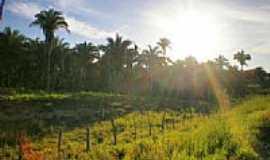Buriti do Tocantins - Pôr do sol sobre babaçus em Buriti do Tocantins-TO por Odir Correira