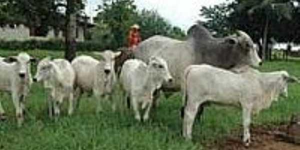 Fazenda Vale do Boi-Foto:gurupionline