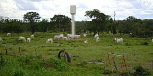 Crixás do Tocantins-TO-Fazenda de gado-Foto:www.mfrural.com.br