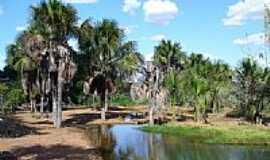 Gurupi - Córrego Mutuca-Foto:Israel Oliveira