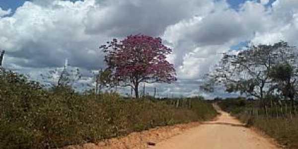 Lagoa de Pedra-AL-Ipê roxo na estrada-Foto:PtAf