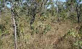 Santa Maria do Tocantins - Vegetação
