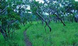 Taquarussu do Tocantins - Serra-Foto:giovanerm