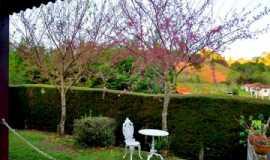 Pousada Flor de Cerejeira